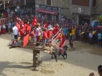 Fiesta de Toros Cuacos de Yuste 2015 4